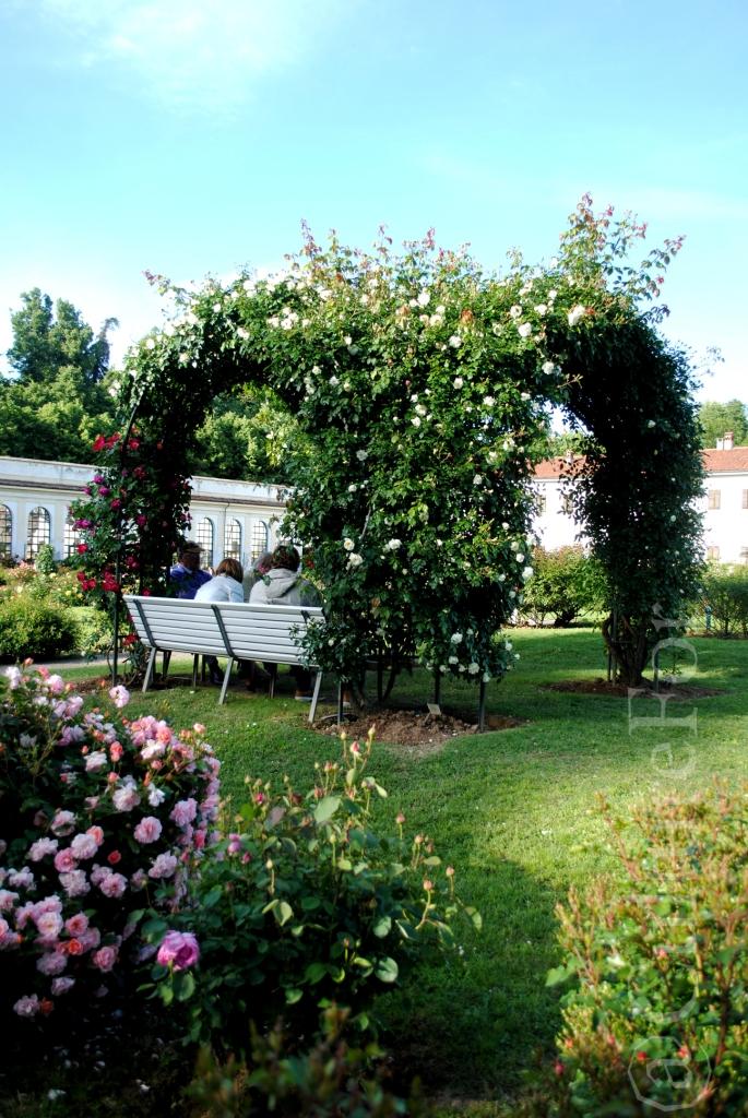 Il Roseto della Villa Reale @Monza_www.culturefor.com
