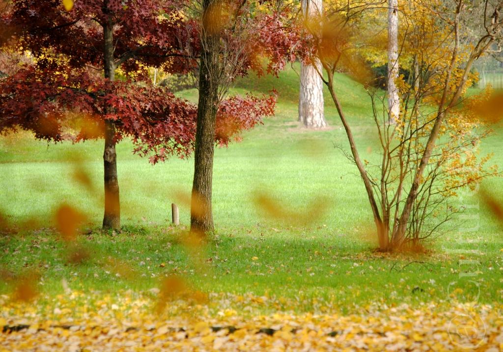 L autunno nei giardini reali monza culture for for Laghetti nei giardini