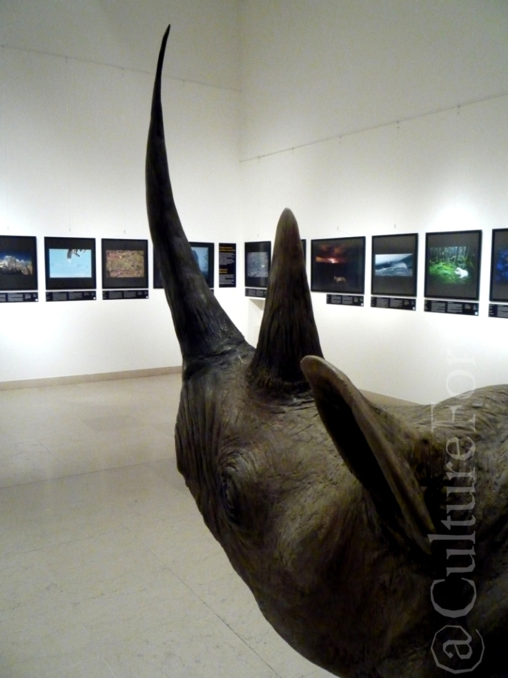 Wildlife Photographer of the Year 2013 @Museo Minguzzi _www.culturefor.com-2