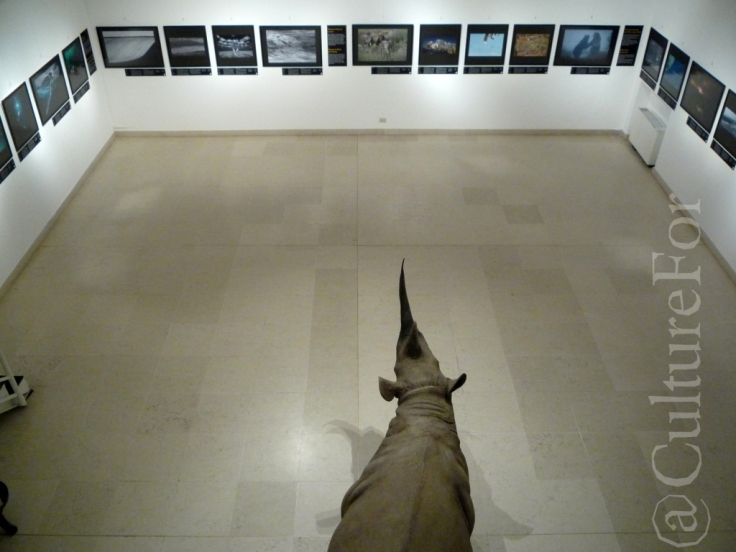 Wildlife Photographer of the Year 2013 @Museo Minguzzi _www.culturefor.com-3