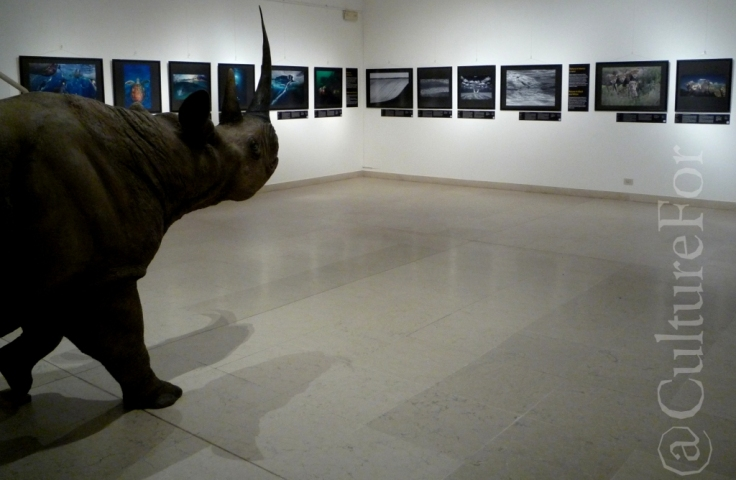 Wildlife Photographer of the Year 2013 @Museo Minguzzi _www.culturefor.com
