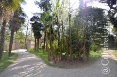 L'Orto Botanico Patrimonio dell'Unesco @Padova _ www.culturefor.com