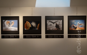 Wildlife Photographer of the Year 2014 @Museo Minguzzi, Milano_ www.culturefor.com