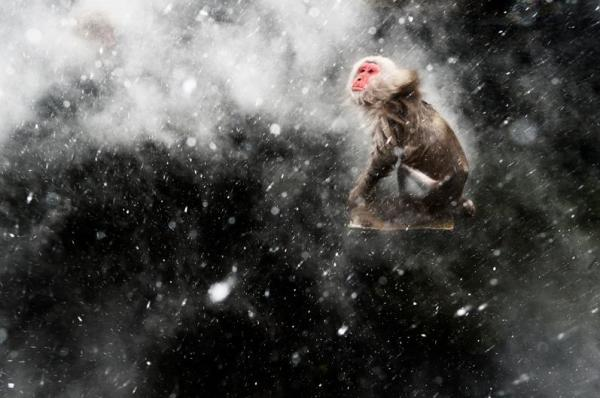 © Jasper Doest (The Netherlands) Snow moment Wildlife Photographer of the Year 2013 Creative Visions / Visioni creative Winner