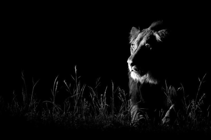 © Andrew Schoeman (South Africa) Shot in the dark Wildlife Photographer of the Year 2013 Nature in Black and White / Natura in bianco e nero Runner up