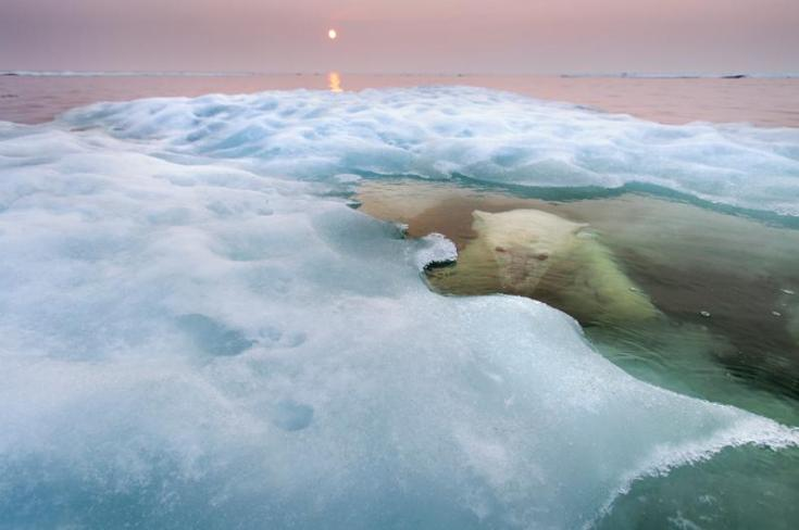 © Paul Souders (USA) The water bear Wildlife Photographer of the Year 2013 Animals in their Environment / Animali nel loro ambiente Winner