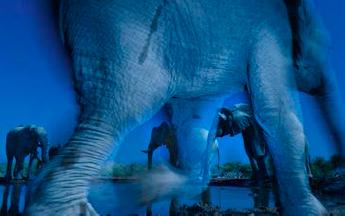 © Greg du Toit (South Africa) Essence of elephants Wildlife Photographer of the Year 2013 Animal Portraits / Ritratti di animali Winner