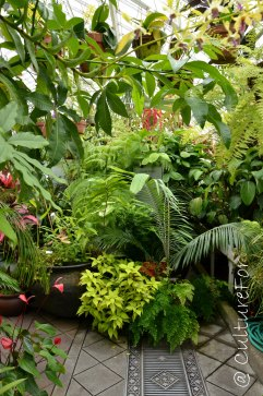 Conservatory of Flowers_www.culturefor.com