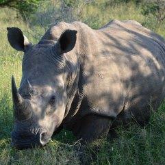 Safari in Sudafrica_www.culturefor.com