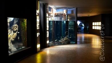 Acquario Civico @Milano_ www.culturefor.com