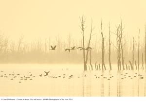 02 _Leon Bohlmann_Gru nell'aurora_Wildlife Photographer of the Year 2014