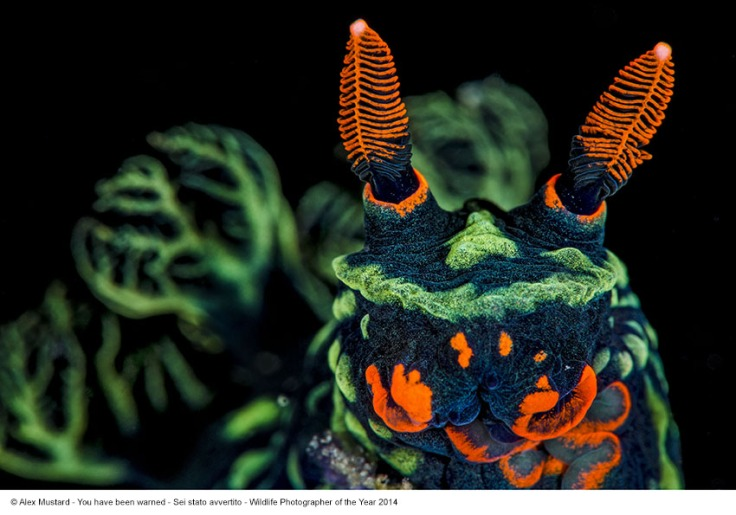 Alex Mustard_Sei stato avvertito_Wildlife Photographer of the Year 2014