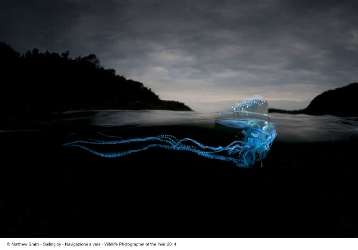 Matthew Smith_Navigazione a vela_Wildlife Photographer of the Year 2014