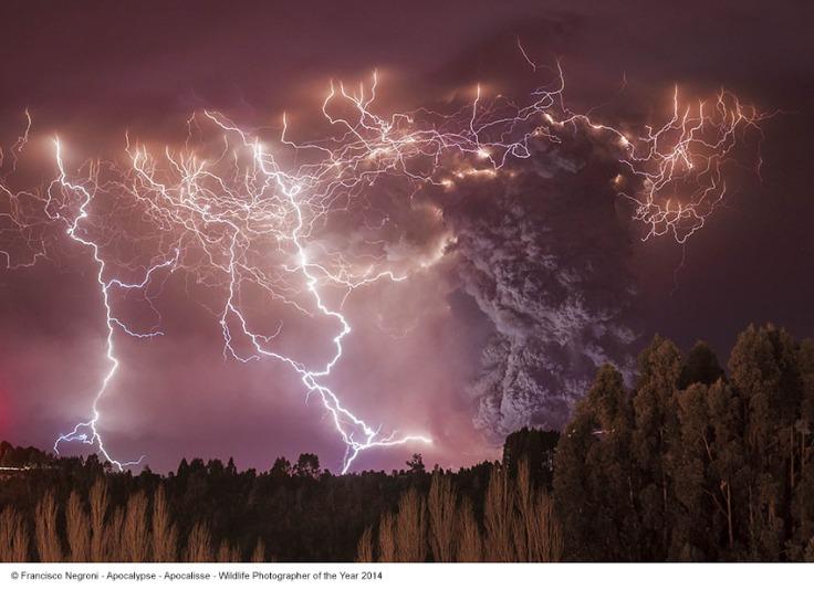 Francisco Negroni_Apocalisse_Wildlife Photographer of the Year 2014