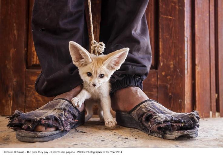 Bruno D'Amicis_Il prezzo che pagano_Wildlife Photographer of the Year 2014