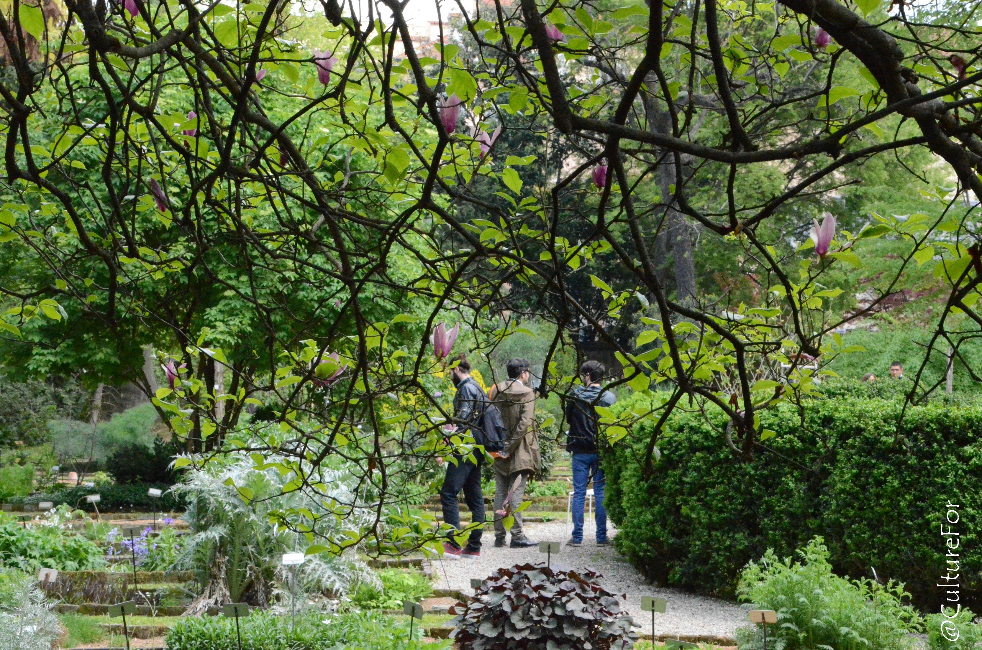La festa del solstizio d estate all orto botanico di brera museo