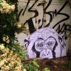 NOBA, street collage