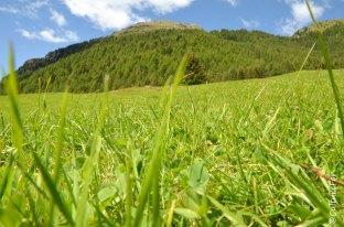 Val Di Rezzalo (5)