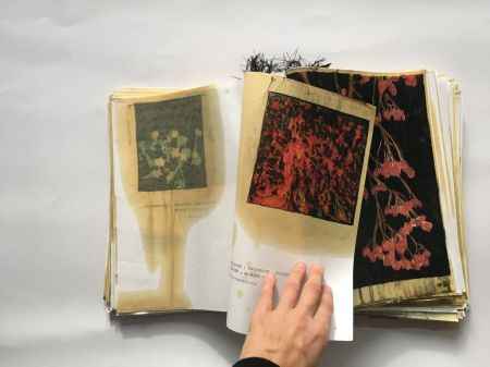 Elena Hamerski, Piante medicinali e velenose della flora italiana, libro 3